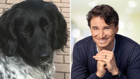 Moderatoren und ihre Hunde