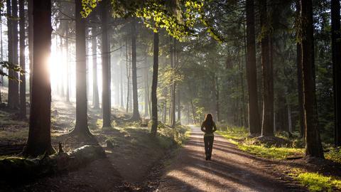 Die Sonne scheint durch Bäume im Wald am Großen Feldberg im Taunus.