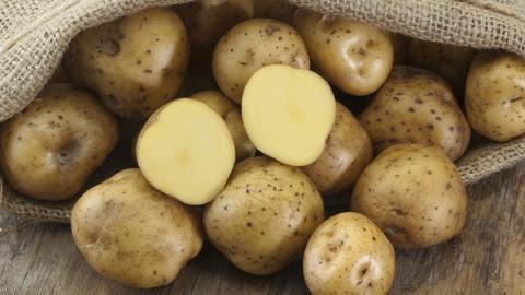 """Kartoffeln der Sorte """"Bonnotte"""""""