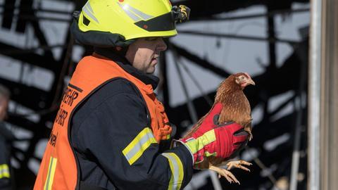 Ein Feuerwehrmann rettet ein Huhn bei einem Brand in einer Hühnerhof in Karben