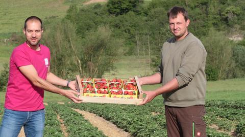 Jürgen Scholle und Dirk Fülling mit einer Kiste voller Erdbeerschälchen im Erdbeerfeld