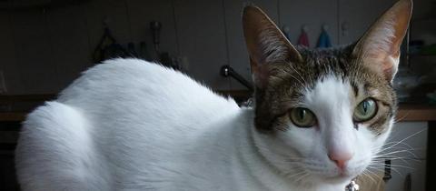 Katze Nala