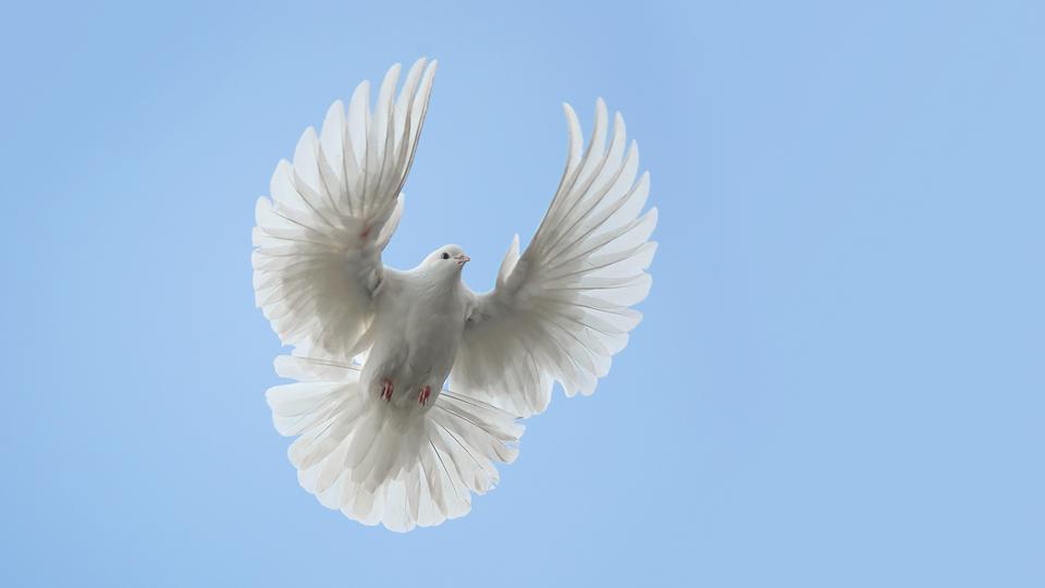 Taube am Himmel