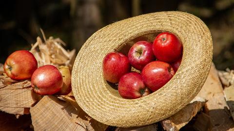 Gepflückte Äpfel in einem Hut