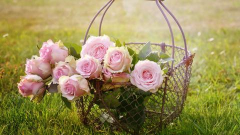 Rosen in einem Korb