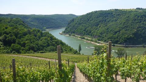 Unterwegs auf dem Rheinsteig
