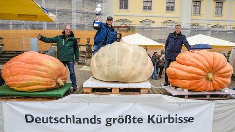 Die drei größten Kürbisse 2019 in Deutschland
