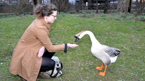 Nadine Siegmund füttert Ganter Joker.