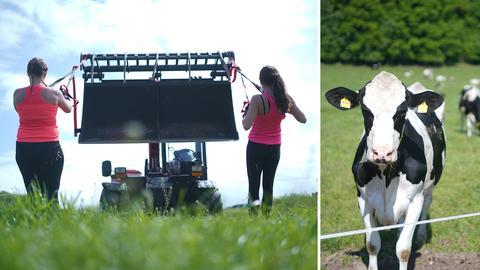 Zwei Frauen ziehen an Seilen, die an einem Traktor angebracht sind, eine Kuh steht auf einer Weide und schaut zu