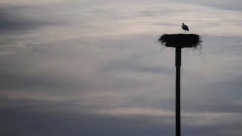 Storch auf seinem Nest bei Nidderau