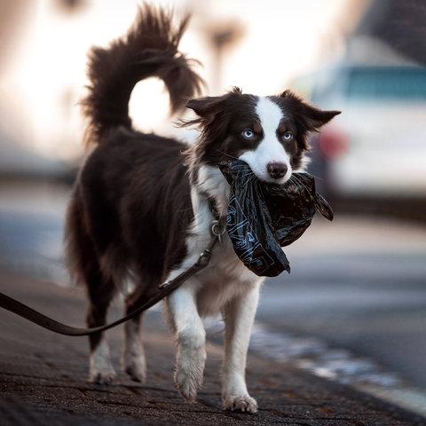 Superhund Holly