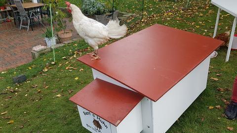 Veras Hühner-Tagebuch