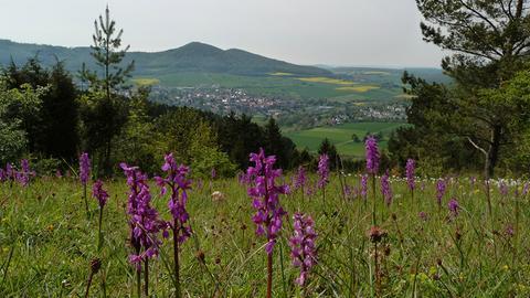 Alpenpfad Zierenberg