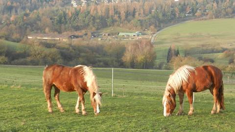 Arche-Region Kellerwald