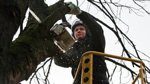 Baumpfleger im Einsatz
