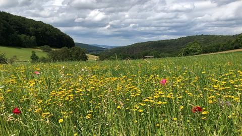 Blumenwiese am Meißner