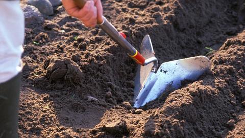 Mit einem Kultivator wird eine Furche gezogen