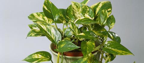 Drei Beliebte Und Pflegeleichte Zimmerpflanzen Tipps Von