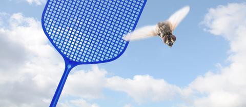 Fliegenklatsche