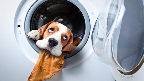 Ein Hund schaut aus einer offenen Waschmaschine