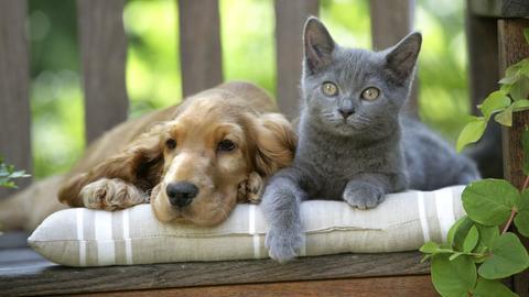 Ein kleiner Jack-Russel-Terrier und eine Katze sitzen auf einer Bank