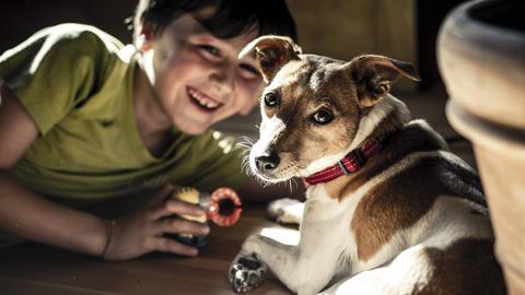 Ein Junge liegt mit einem Hund auf dem Boden und spielt