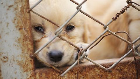 Ein Hundewelpe sitzt hinter einem Maschendrahtzaun