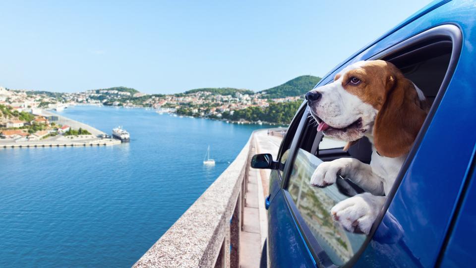 Beagle schaut aus dem Autofenster auf eine Küstenlandschaft am Mittelmeer