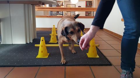 Hundemassagen
