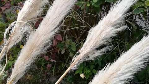 Weide-Zweige im Garten