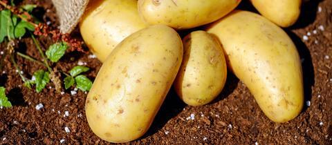 Kartoffeln auf dem Feld