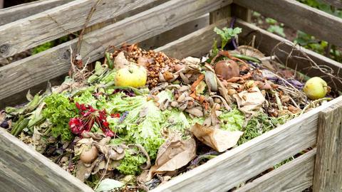 Kompost im Garten mit Essensresten wie Eierschalen und Salat.