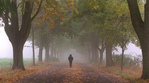 Bei nebeligem Wetter macht eine Frau einen Spaziergang durch eine Baumallee in der Nähe von Oberursel im Taunus.