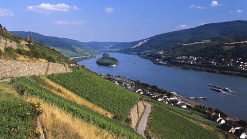 Blick über Lorchhausen und das Rheintal