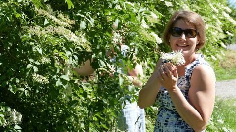 Einfach selber machen: Naturkosmetik mit Holunderblüten