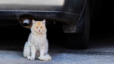 Tiere und Straßenverkehr