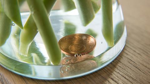 Ein 5-Cent-Stück liegt in einer Vase mit frischen Tulpen