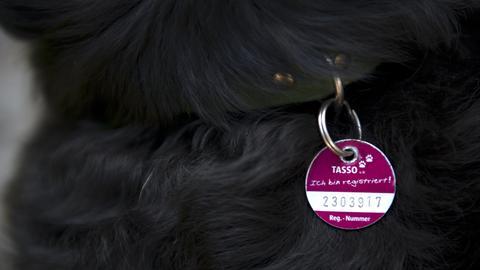Ein Hundehalsband mit Tasso-Marke