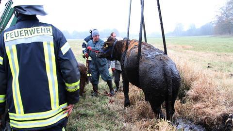 Feuerwehr rettet ein Tier - Kuh wird aus einem Graben gezogen