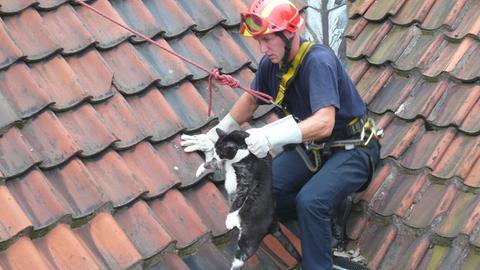 Feuerwehr rettet ein Tier - Katze auf einem Dach