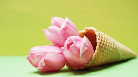 Tulpen Eiswaffel