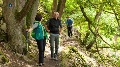 Wandern Urwaldsteig