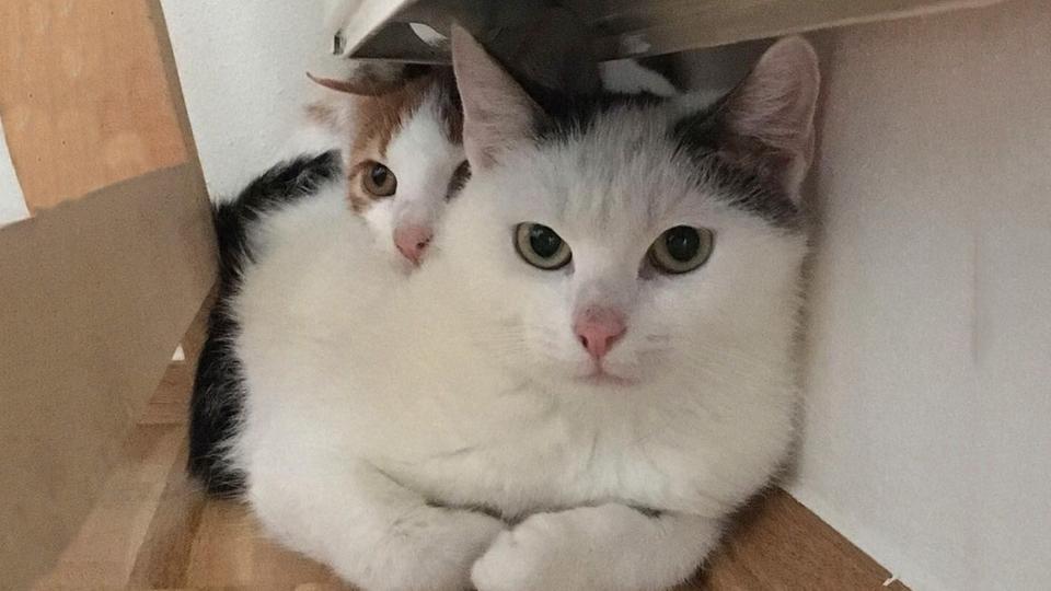 Neues Zuhause F 252 R Zwei Katzen Hr4 De Vierbeiner Sucht Zweibeiner