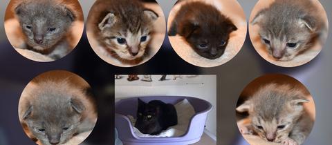 Collage Katzen-Familie