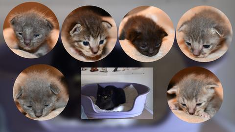 Collage Katzen-Familie