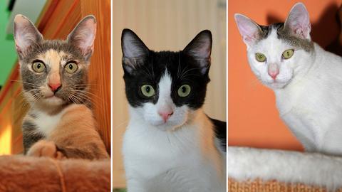 Drei Katzen aus Gießen