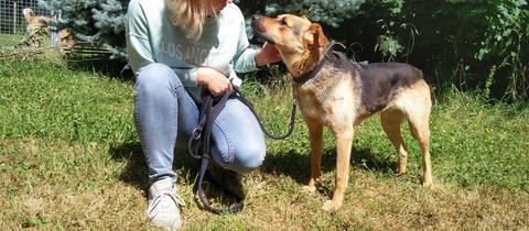 Hund Paul aus Limburg