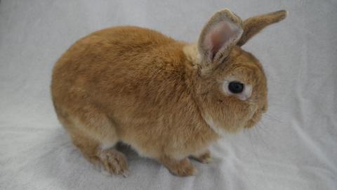 Kaninchen Jenna