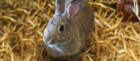 Vier Kaninchen aus Kelsterbach
