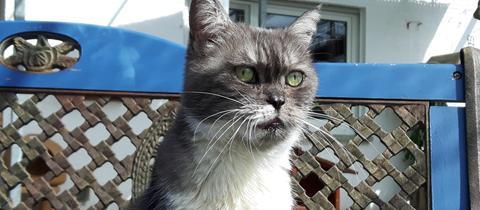 Katze Baronka
